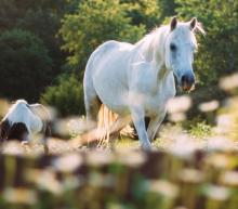 North Shore Preserve | Horses | Oceanfront Rentals on Kauai