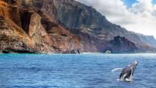 Humback whale at Na Pali coast
